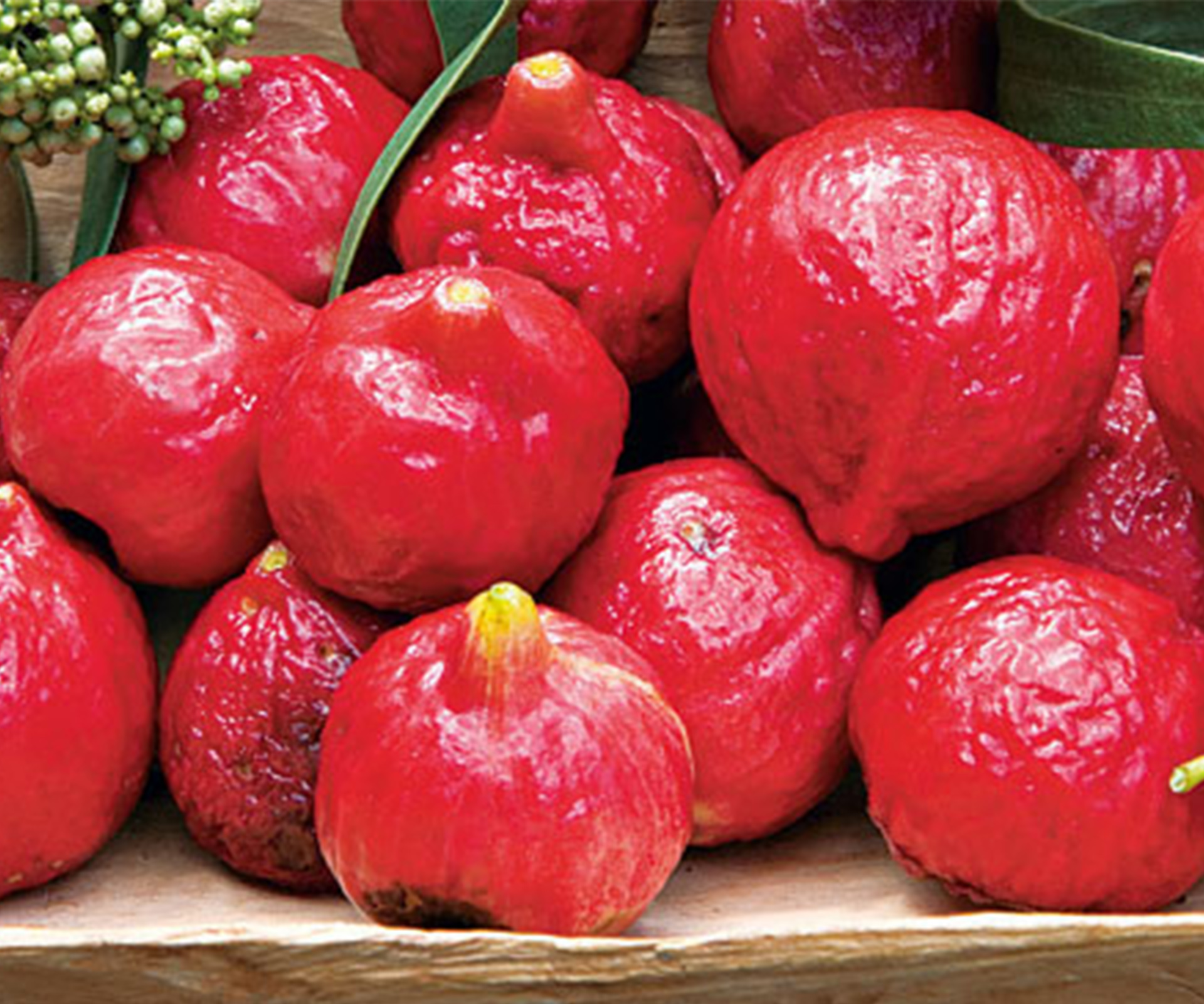 Quandongs: how to grow your own bushtucker