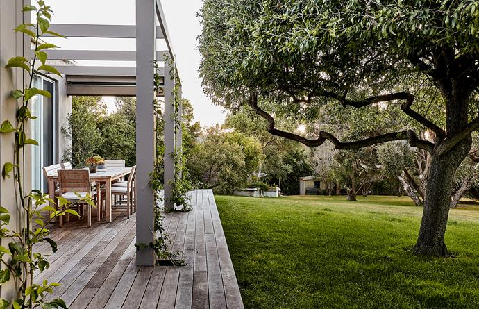 Branches of an old pear tree throw shade onto the rear deck. The decking boards have been left unstained so they echo the silvery-grey tones of the trees in this area including olives, Moonah (Melaleuca lanceolata) and Agonis, and grasses such as coastal spear grass (Austrostipa stipoides) and Lomandra 'Little Pal'. Bougainvillea is growing up the deck posts and a raised vegie garden provides the home cook with fresh herbs.