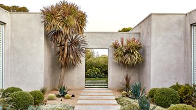 A contemporary coastal garden filled with exotic and native plants