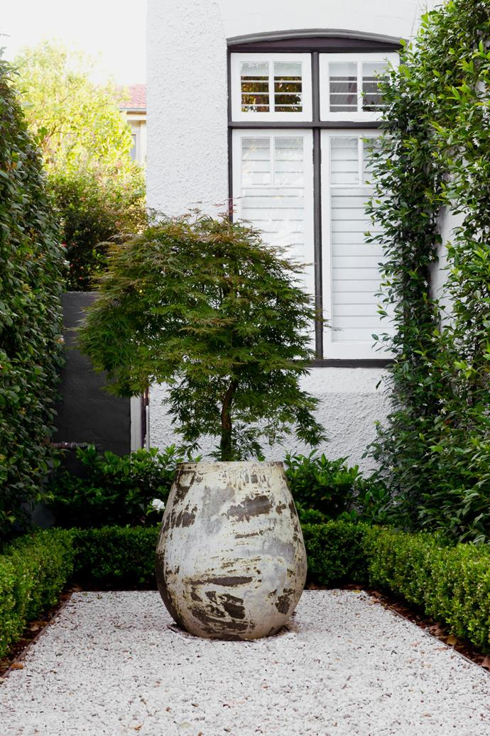 A potted Japanese maple is centred in white gravel at the home's front entrance. Star jasmine covers a crisscross-patterned stainless-steel trellis.