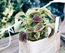 9 indoor plants with patterned leaves