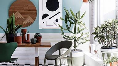 How to care for indoor plants, according to an expert