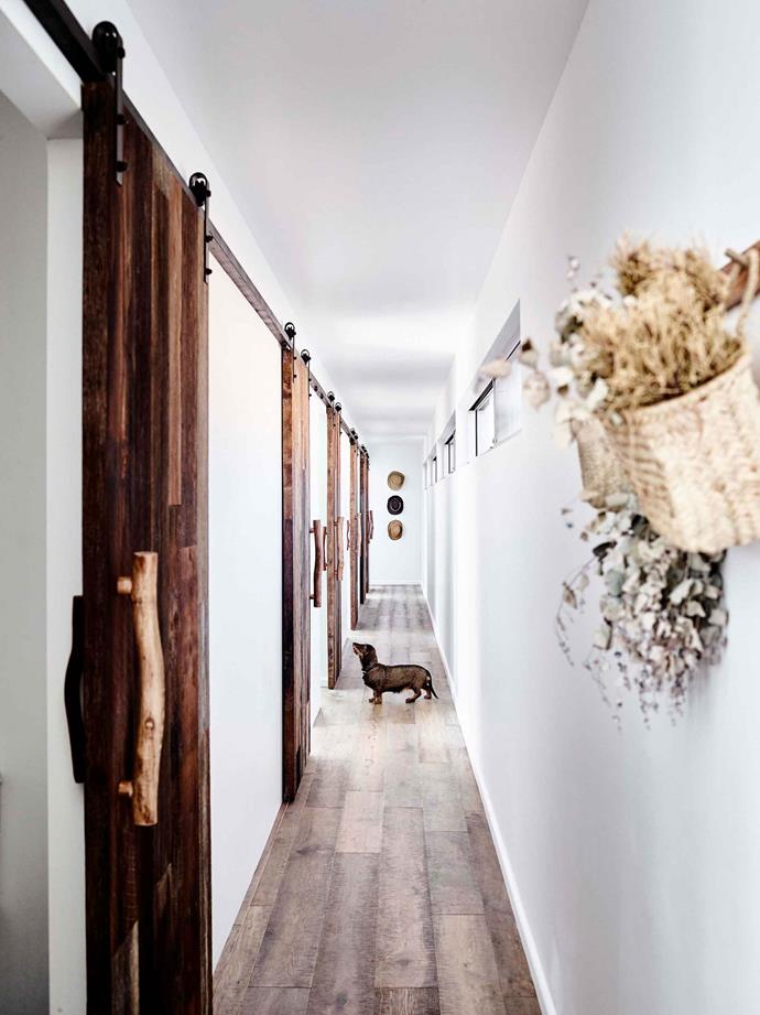 """Mille the wire-haired dachsund in the hallway of the cabin. The hallway features a unique sequence of [barn doors](https://www.homestolove.com.au/maximise-space-and-style-with-barn-doors-6582