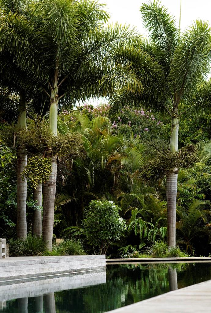 This tranquil swimming pool is flanked by a grove of handsome palms.