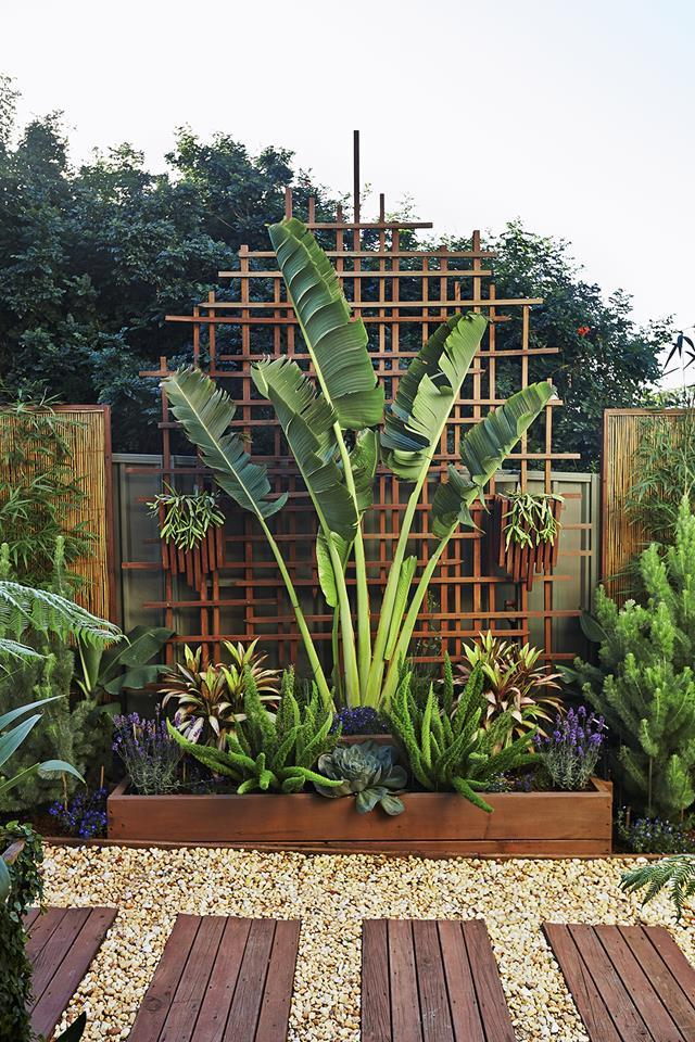 """A traveller's palm provides vertical drama in this [tight space](https://www.homestolove.com.au/greg-and-nickis-lush-tropical-courtyard-1451