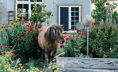 Tour the apple orchard and family cottage at Black Barn Farm