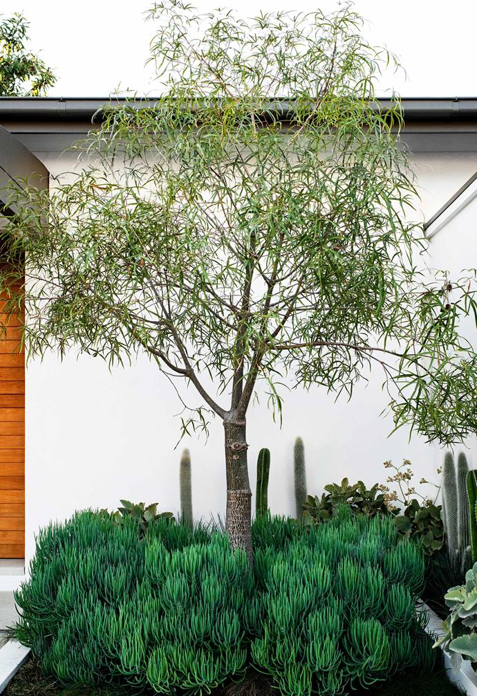 "**Focus feature** This refreshing outdoor space clearly demonstrates how you can use white walls and planters to make plants the focus. Painted [Resene](https://www.resene.com.au/|target=""_blank""