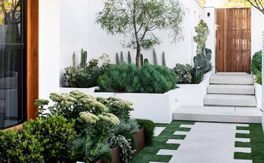 A sustainable succulent garden in Sydney with sculptural drama