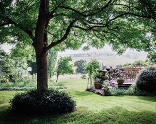 Outdoor eating area shaded by large tree