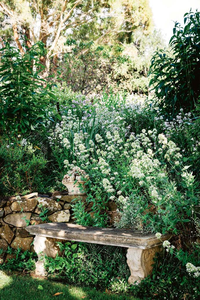 A stone seat backed by a haze of self-sown white centranthus provides a quiet spot to contemplate the results of three decades' worth of dedicated gardening.