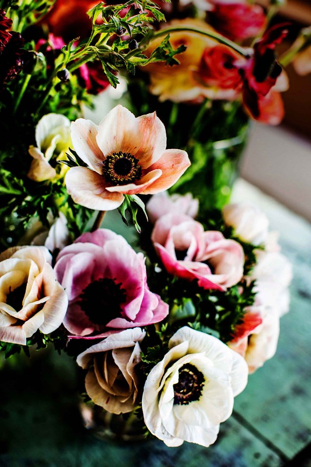 "Anemones and ranunculus grow in abundance in florist Sophie Kurylowicz's garden. Sophie grows flowers on her quarter-acre house block in [Wagga Wagga, NSW](https://www.homestolove.com.au/wagga-florist-20533|target=""_blank""); with the help of business partner Bethany Saab, these become fresh, personal and seasonal wedding bouquets and installations."