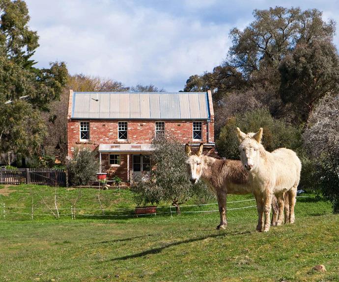 Pet donkeys Ki Ki and Dou Dou.
