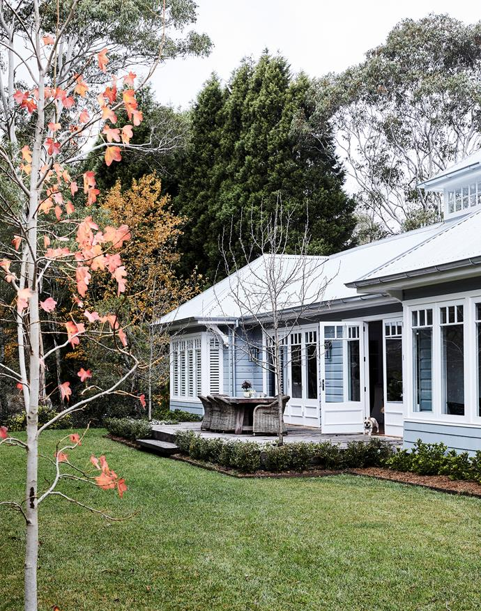 """Fringing the deck is a hedge of English box with trees including deciduous Manchurian pears and a liquidambar. """"The exterior paint colour looks great alongside the foliage,"""" says Brielle."""
