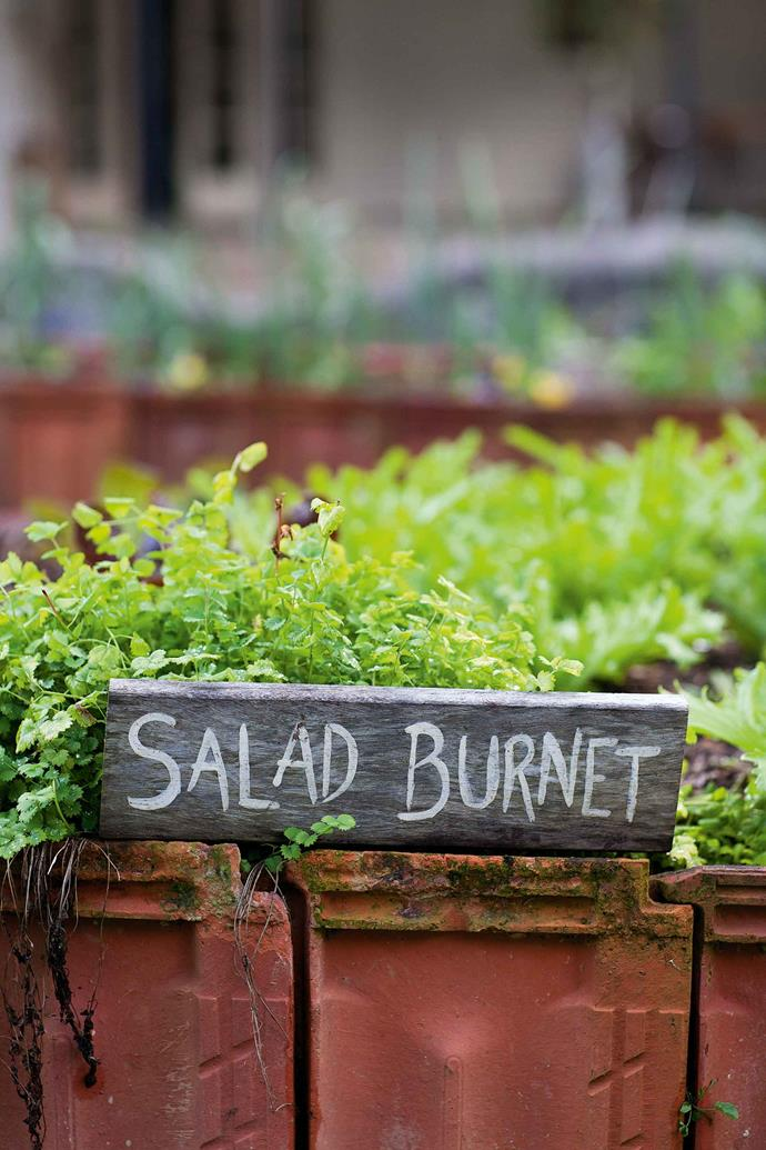 Salad greens in the kitchen garden. The restaurant's menu utilises the freshly grown produce on the property.