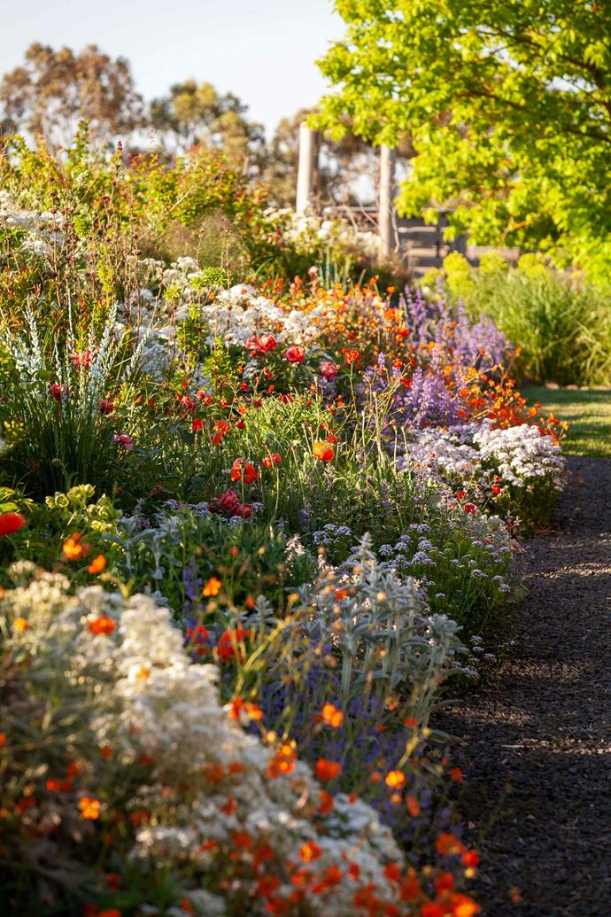 A deep border planted with geums, salvias, fennel, euphorbia and japonica makes an eye–catching display year–round.