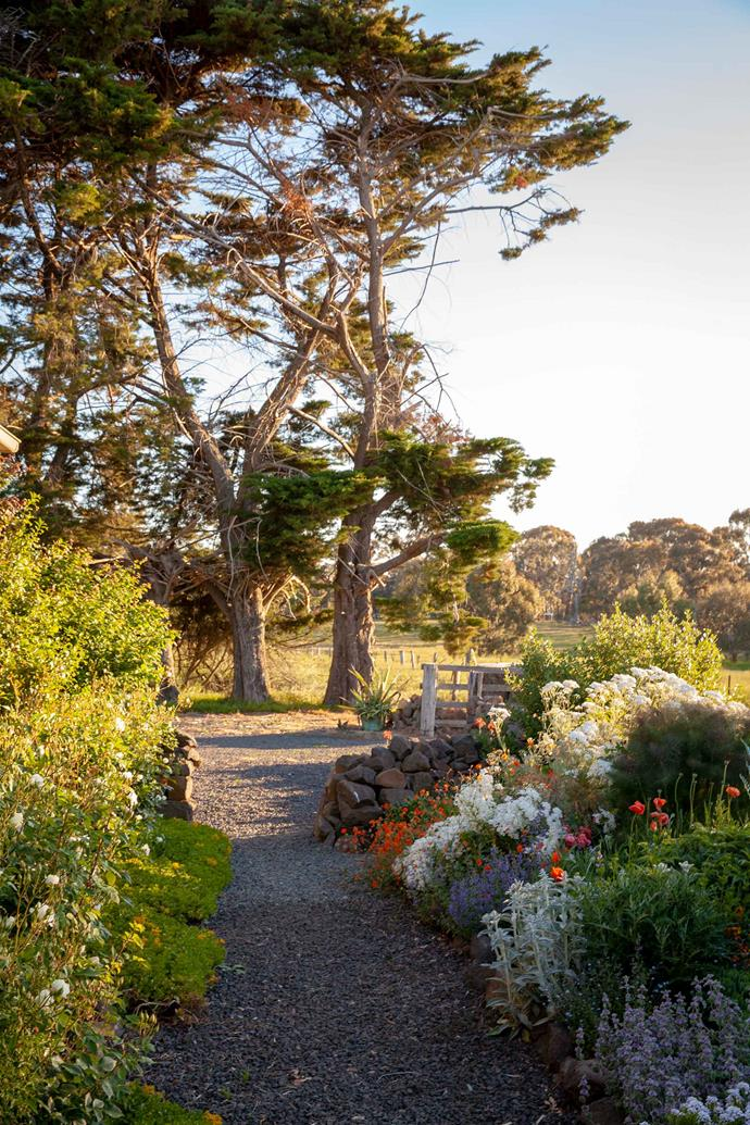 A garden path leads up to a row of old Monterey cypress trees.