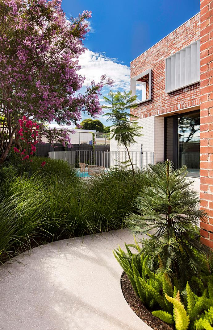 An established crepe myrtle provides shade and colour in this Melbourne garden.