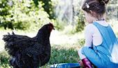 6 tips for keeping chickens happy and healthy