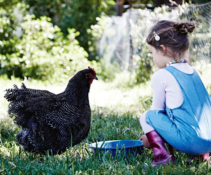 Girl giving water to Plymouth Rock chicken