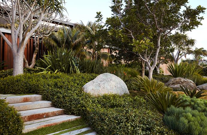 The entry landscape consists of granite boulders wrapped in mass plantings of star jasmine. Tree aloes, kentia palms and tuckeroo trees bring scale and filter the elevation of the house, designed by MCK Architects.