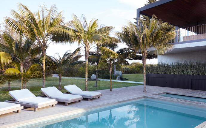 Mature kentia palms were planted on the eastern side of the garden around the pool and spa. A timber planter filled with mother-in-law's tongue acts as a pool fence as well as well as housing the outdoor television that can be viewed from the spa.