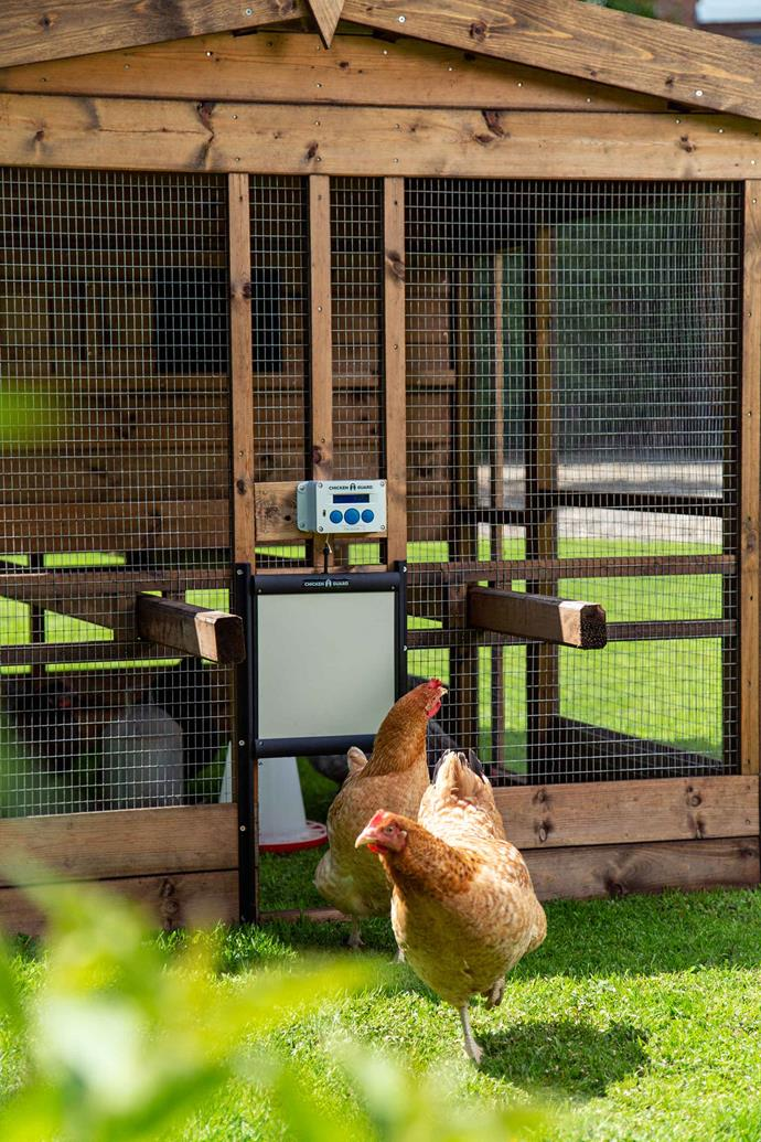 """A chicken coop with a [ChickenGuard](https://www.chickenguard.com