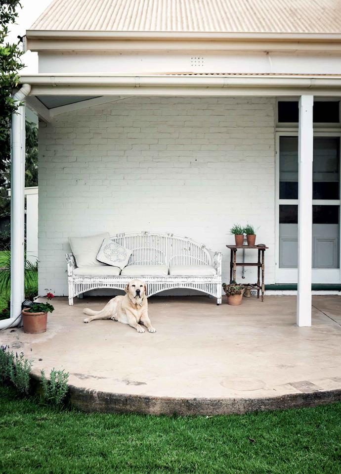 Norm and Georgi's Labrador takes some time out on the verandah.