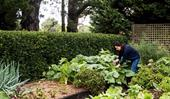 Tips for growing starch vegetables including potatoes, yams and more
