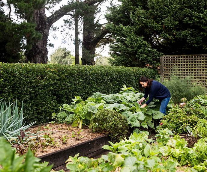 Woman gardening in vegetable patch
