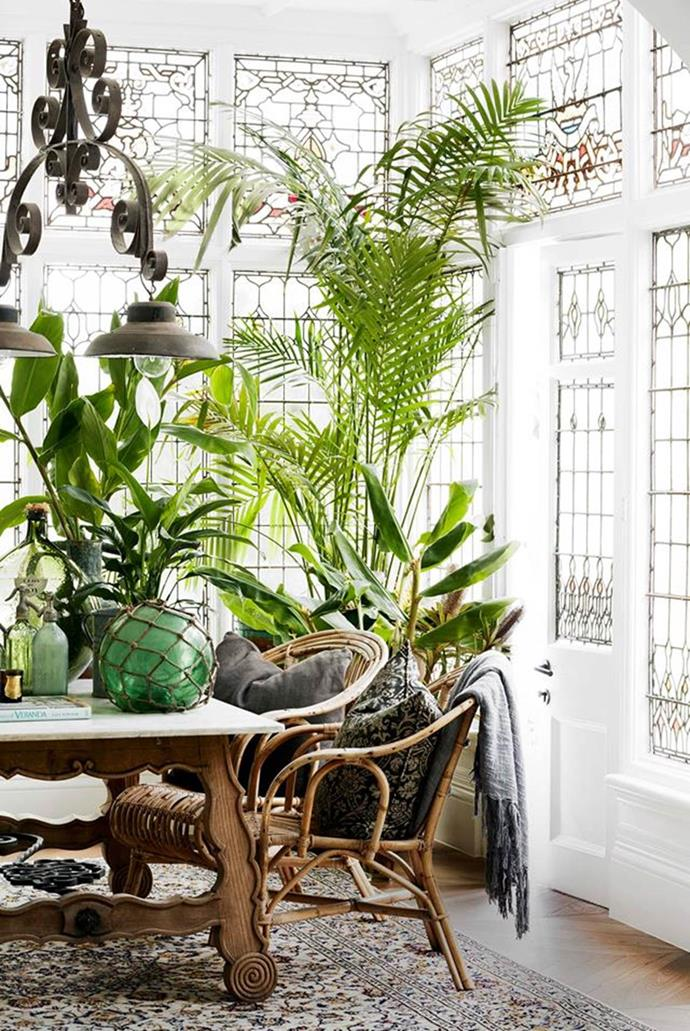 Cane armchairs and potted palm trees echo the tropics in this grand Gothic revival home's conservatory designed by Hancock Architects. Photographer: Prue Ruscoe | Stylist: Alexandra Gordon