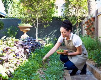 Woman kneeling in the garden picking fresh herbs
