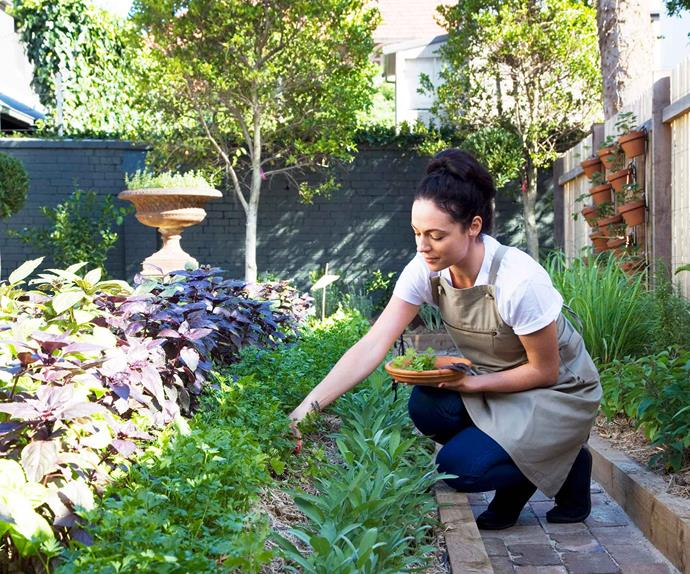 Woman kneeling in the garden picking fresh herbs