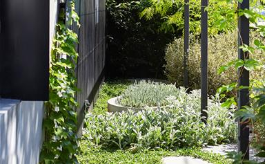 This compact courtyard garden boasts clever design