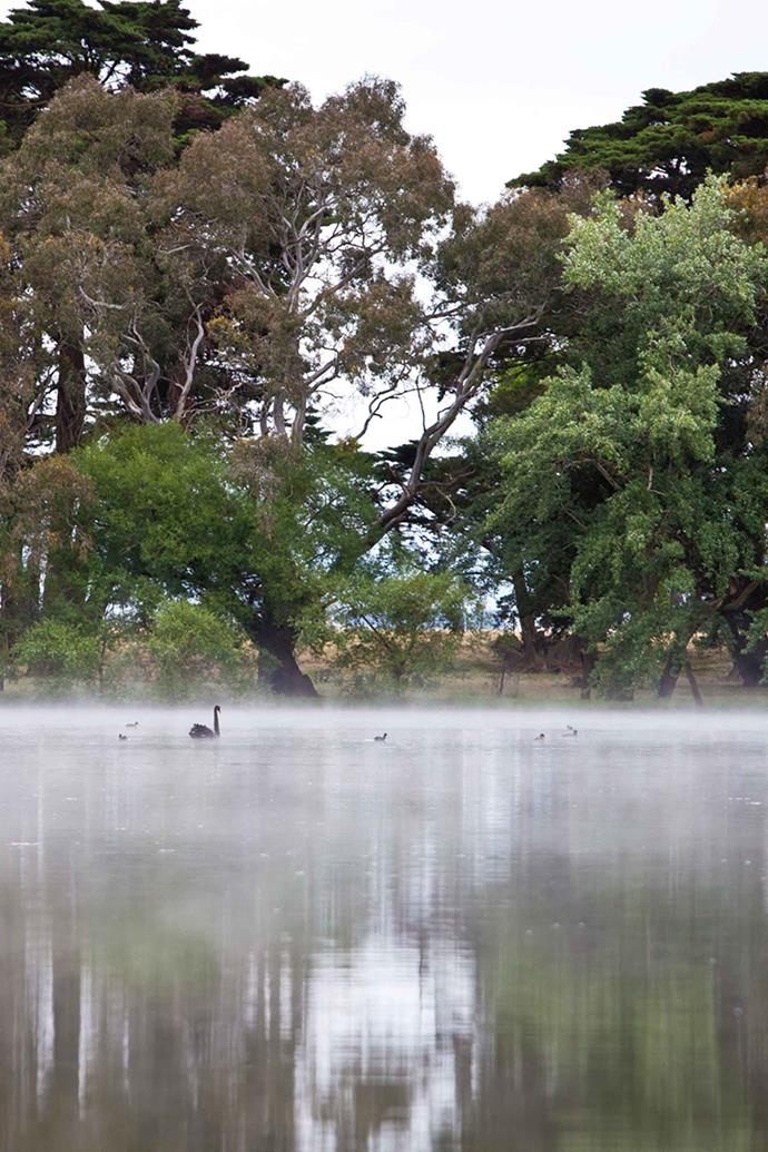 The garden's vistas were further enhanced in the 1920s when the lake — designed by Sir John Monash — was developed.