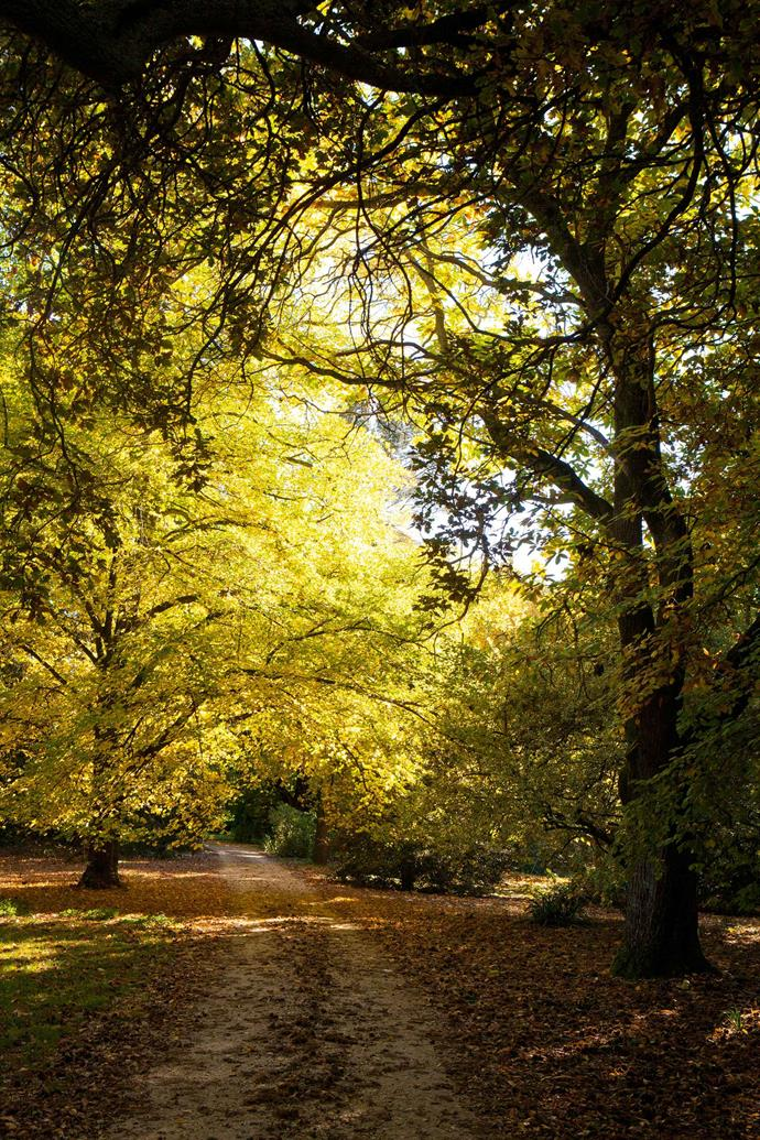 The driveway passes under 160-year-old trees in the oldest part of the garden.