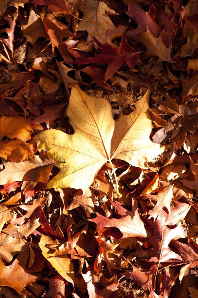 Golden leaves carpet the garden at Wombat Park in autumn.