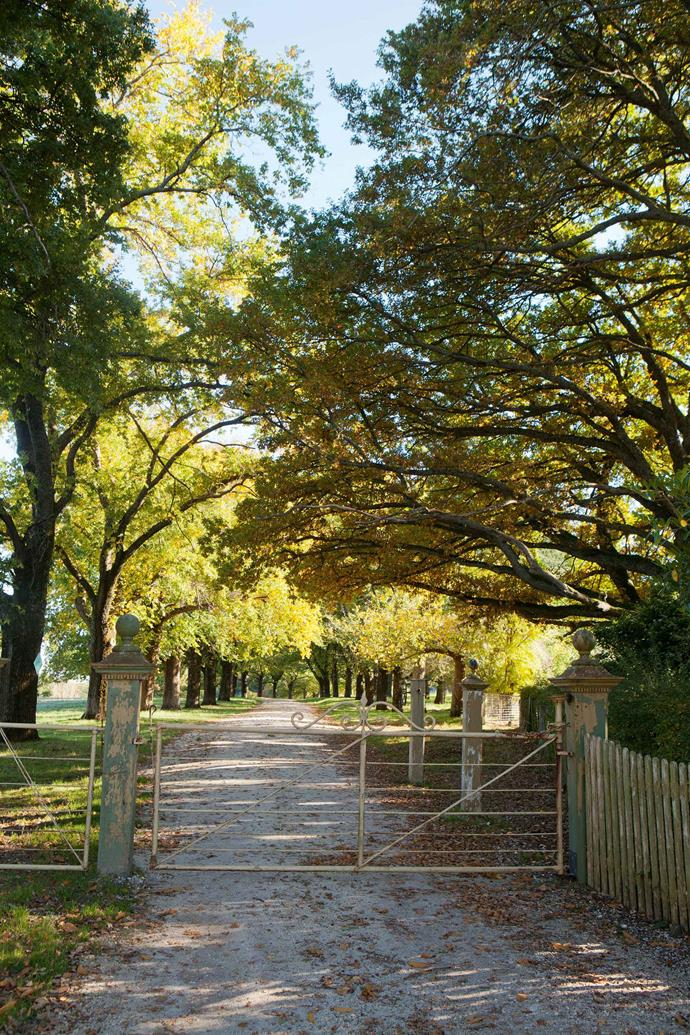 The entrance drive is flanked by an avenue of elms.