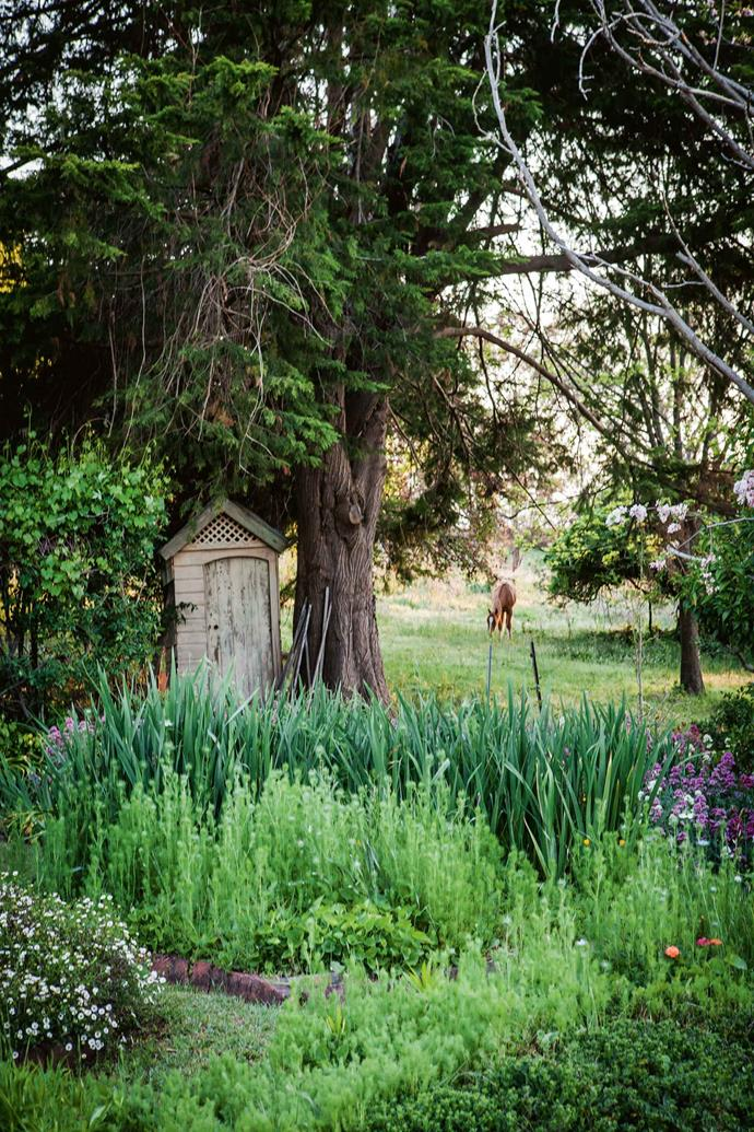 Judy uses an old outhouse as a tool shed. Teresa and Mark have planted avenues of Lombardy poplars and lipstick maples along the fence and driveway, in a form of succession planning for when they may lose some of the oaks and golden elms that are more than a century old.