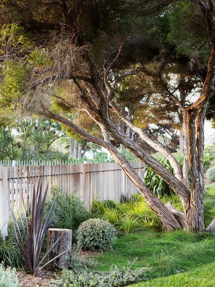 Landscape designer Fiona Brockhoff worked this existing bottlebrush into her design.