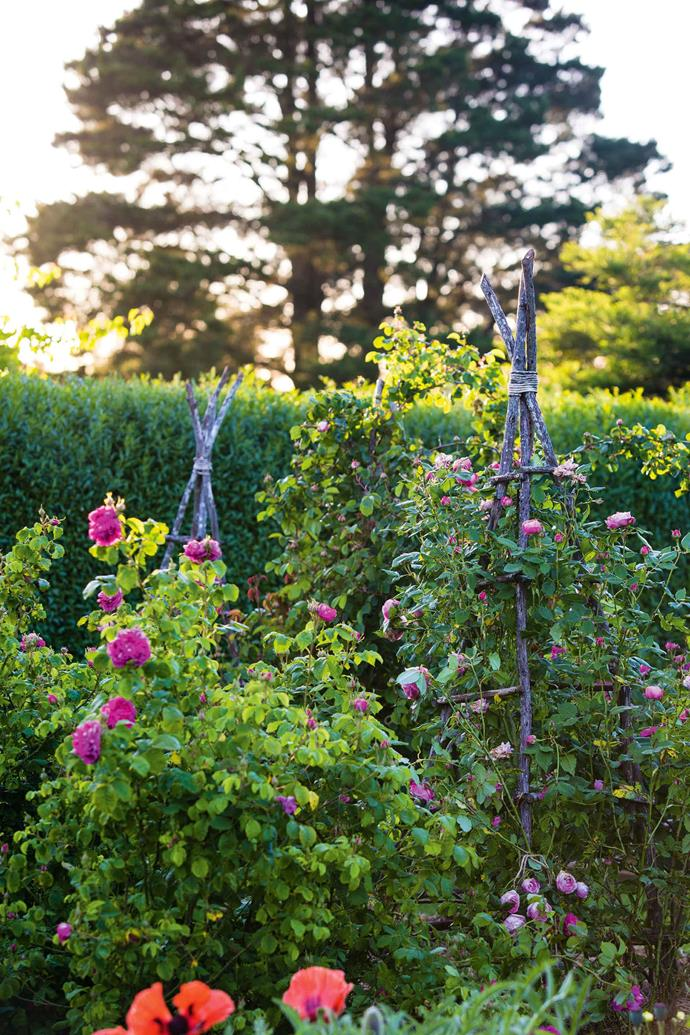 "'Rose de Rescht' (left) and 'La Reine Victoria' roses climb tripods in the kitchen garden. ""This garden is changing constantly, as our tastes have changed,"" Nigel says. ""Originally these borders were in more of a prairie style, but we've softened them over time."""