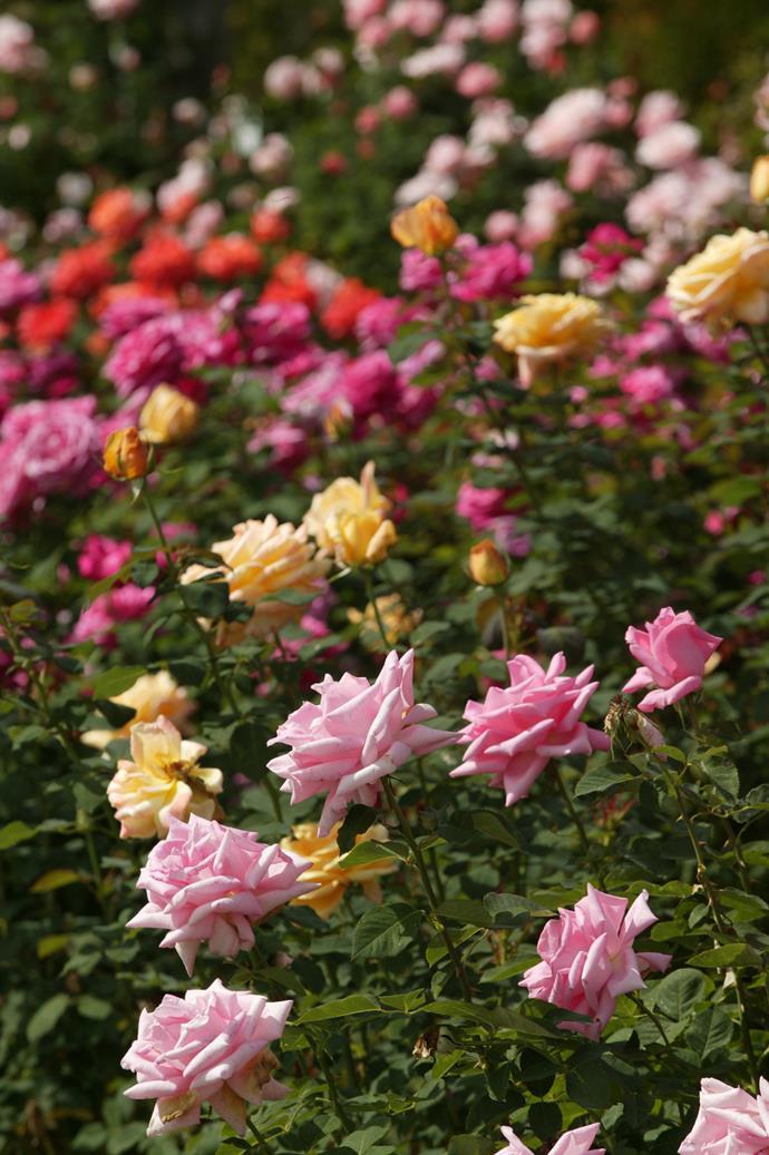 *Photograph: Brent Wilson / bauersyndication.com.au*