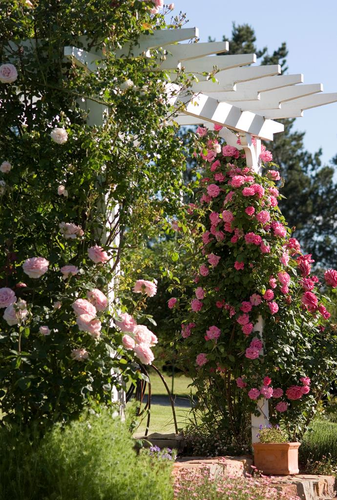 *Photograph: Simon Kenny / bauersyndication.com.au*