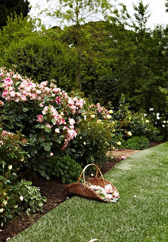 *Photograph: Armelle Habib / bauersyndication.com.au*