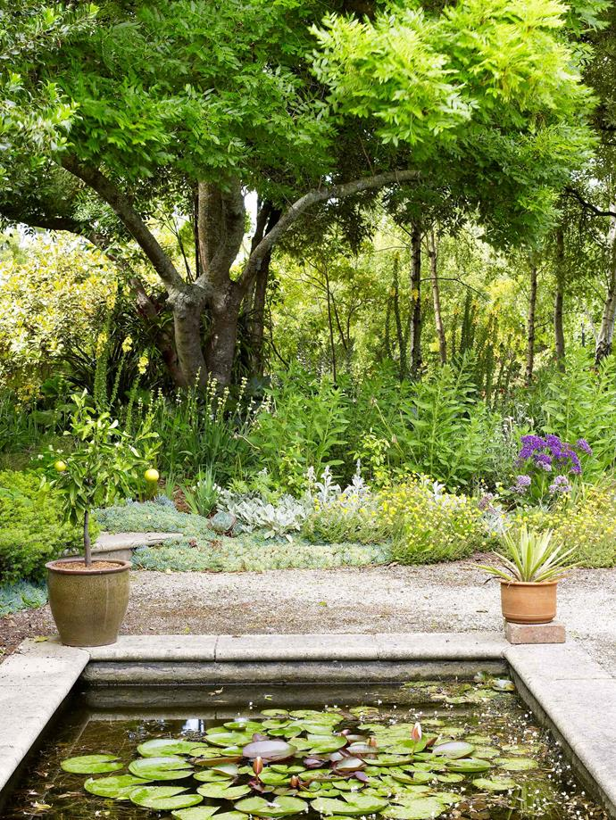 Spring is a great time to clean water features and ponds.