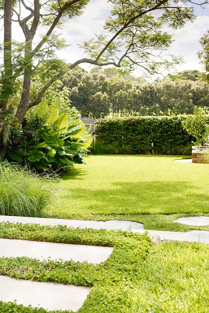 Get your lawn in tip top shape by removing thatch build-up and replanting bare areas.