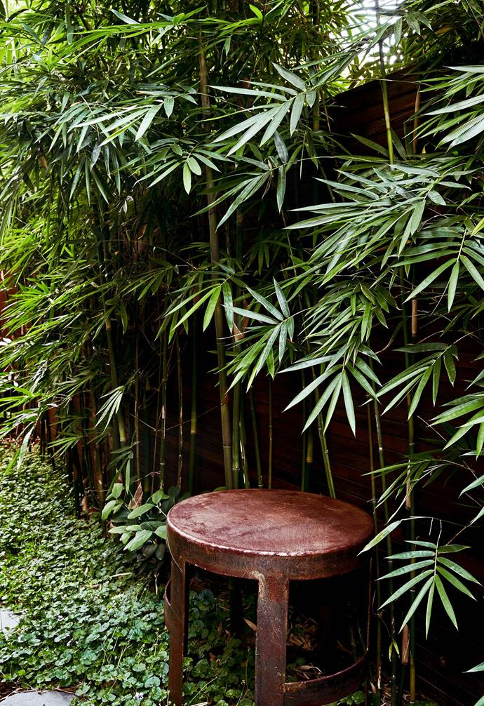 "This is part of the L-shaped section the owners refer to as the artist's nook. A bespoke steel table sits on the native violet [groundcover](https://www.homestolove.com.au/a-guide-to-groundcovers-3632|target=""_blank"")."