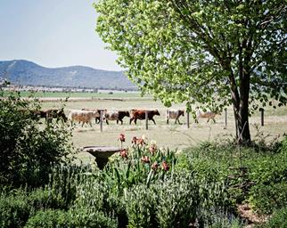 Flower garden with cattle in the background