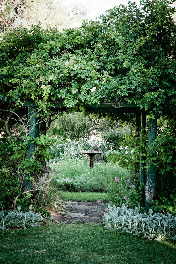 "Through the garden arbour, a bird bath is visible. It was moved from another part of the garden to become a feature at the centre of a bed of Californian poppies and seaside daisies. Meg and Colin were fortunate to inherit a century-old framework, including an orchard of towering pear, orange and [fig trees](https://www.homestolove.com.au/how-to-grow-figs-9452|target=""_blank""), arbours of woodbine and 'Mermaid' climbing roses, peppercorn trees and a 30-metre high windmill wreathed in ivy."