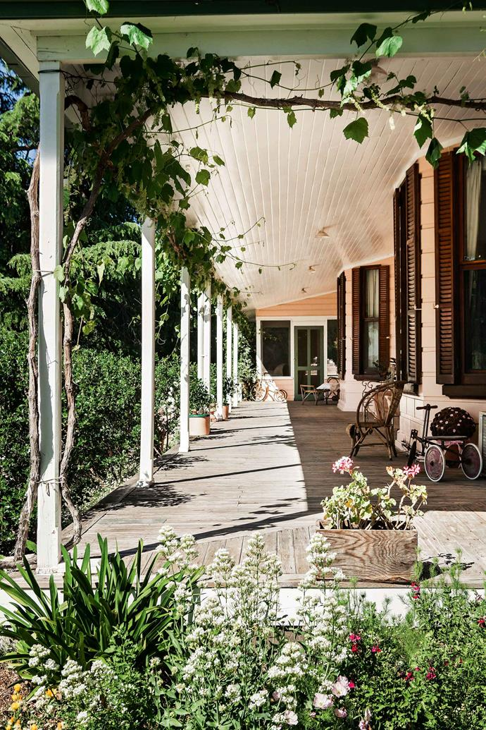 "An ornamental grapevine entwined on the [verandah](https://www.homestolove.com.au/country-verandahs-13365|target=""_blank""). The front bed is planted with escallonia while on the side is a mix of agapanthus, salvia and valerian. ""I had a blessed childhood of picnics in paddocks, climbing the Grampians, and my own little garden of irises and bulbs as well as a secret place for contemplation among the red gum suckers."""