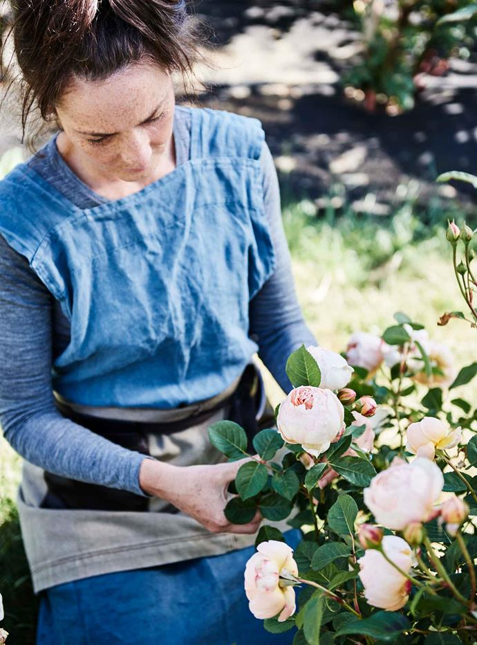 Danni with one of the David Austin roses they grow, 'Scepter'd Isle'.